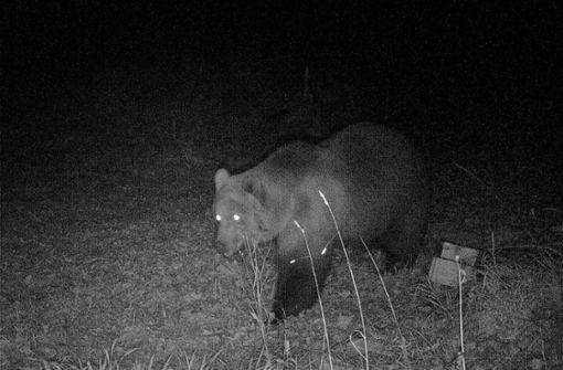 Kommt der Bär nach Baden-Württemberg?