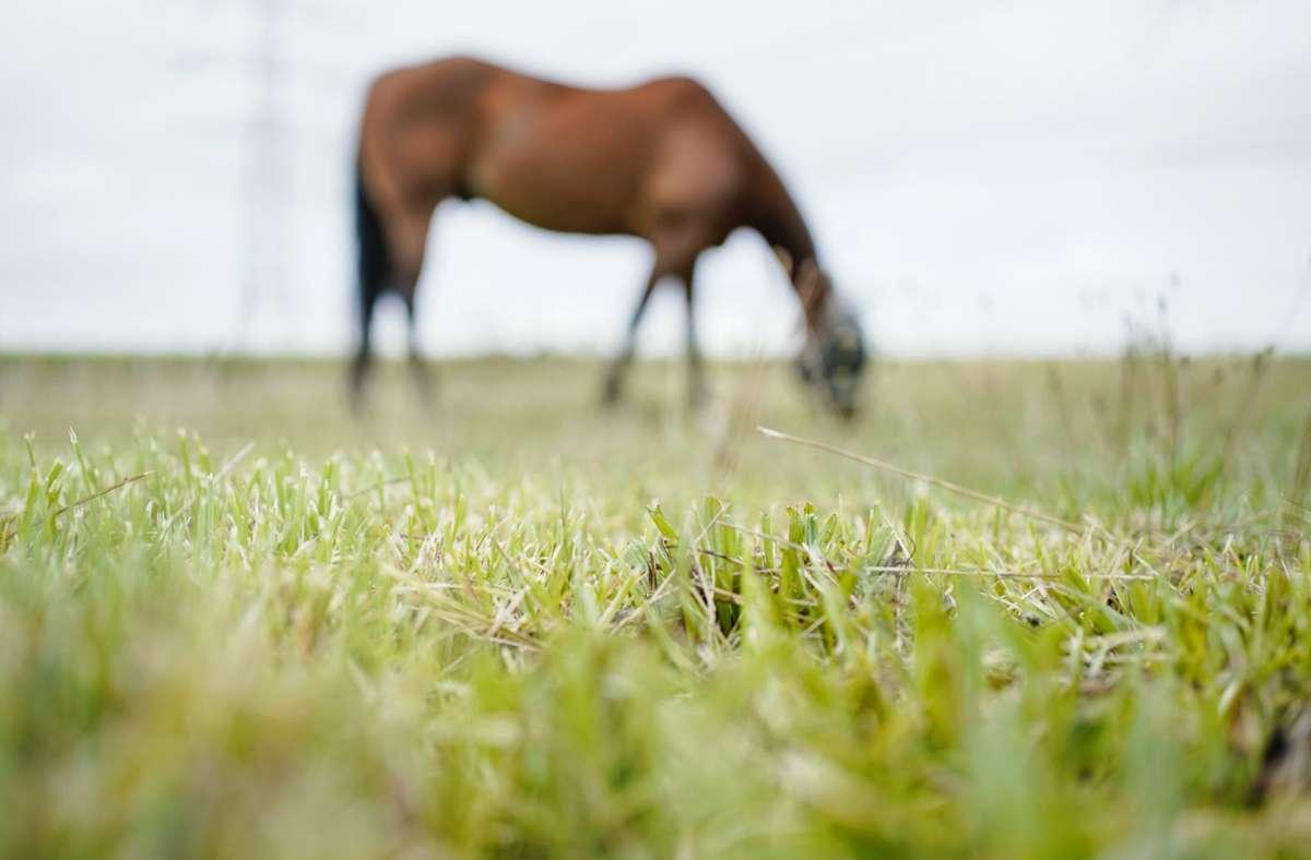 Ein Pferd starb nach einem Turnier in Pforzheim (Symbolbild). Foto: dpa/Uwe Anspach