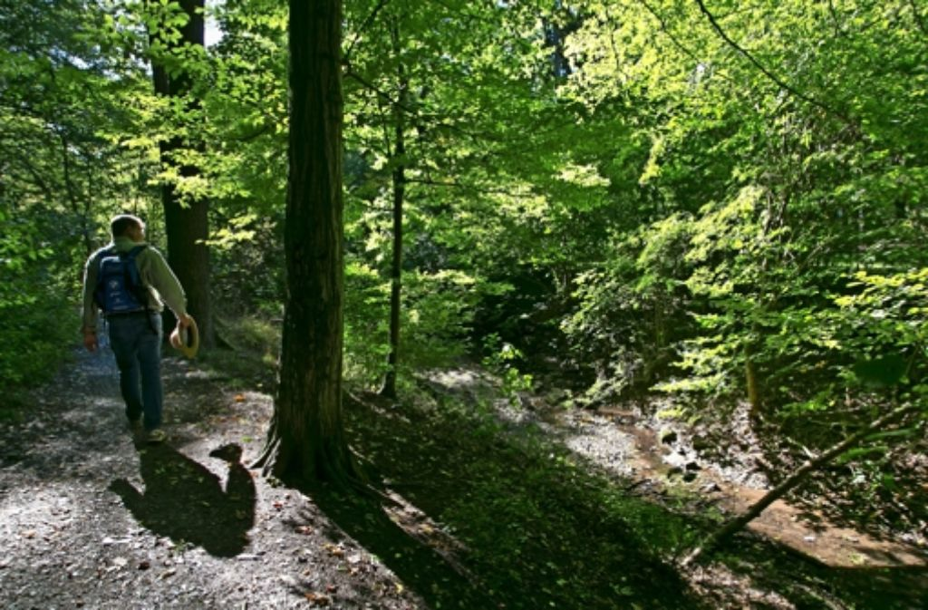Unser Autor Uli Stolte wandelt  auf einem schmalen Pfad am Lindenbach. Foto: Wilhelm Mierendorf