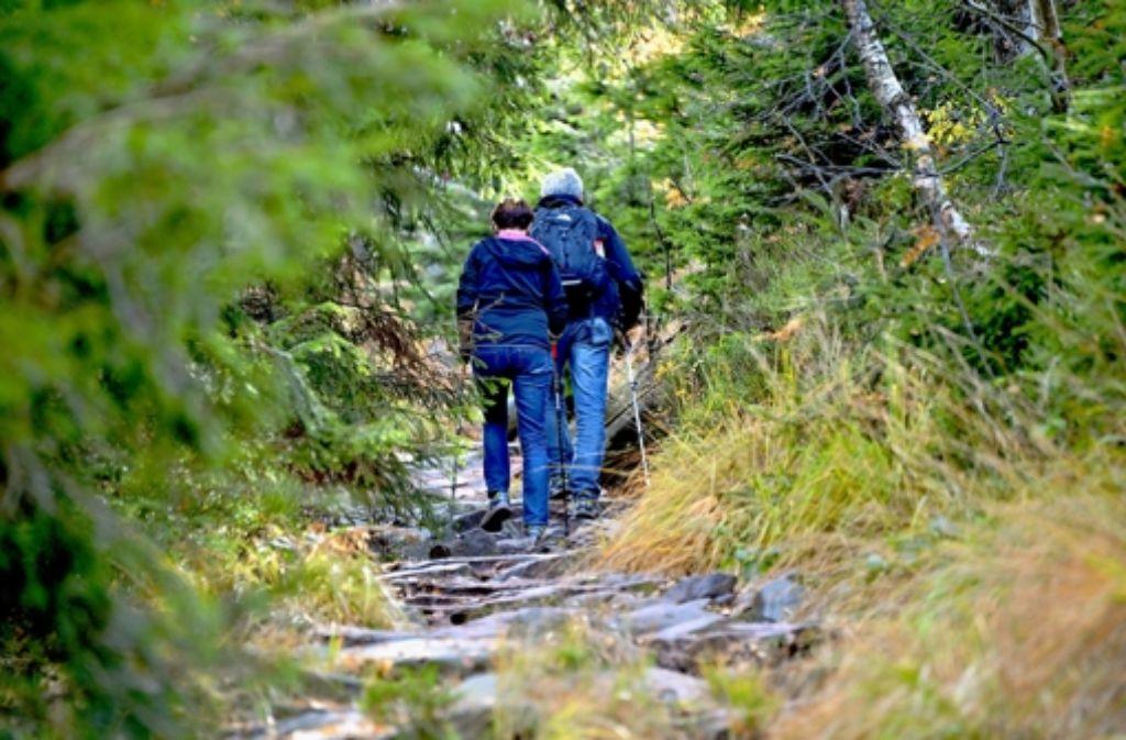 Wanderer am Ruhestein im künftigen Nationalpark. Die CDU-Opposition im Landtag will allerdings ein Gegenkonzept erstellen. Foto: dpa