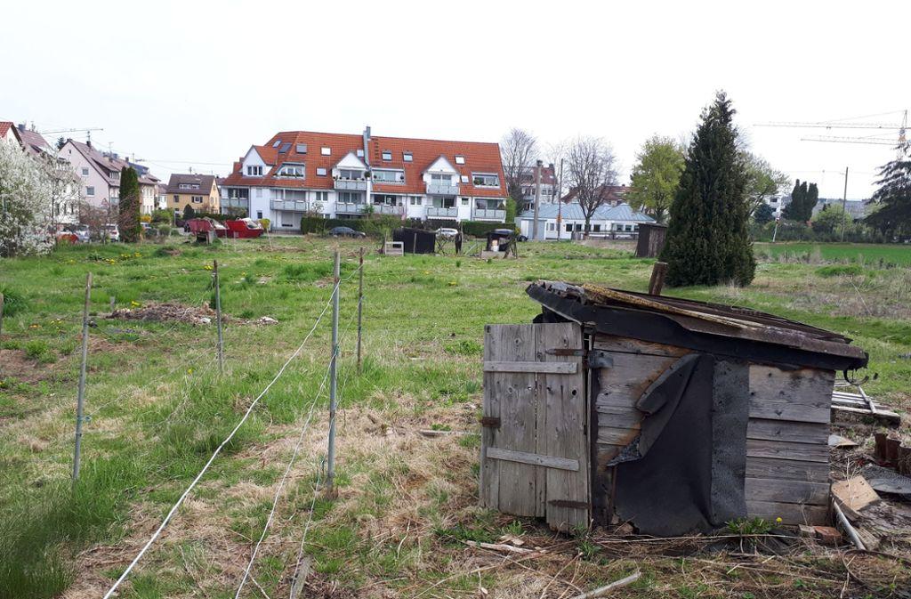 Letzte Reste der Schrebergartenkolonie: Baugebiet Esslinger Weg I. Foto: her