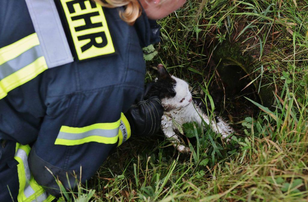 In Schorndorf-Haubersbronn wurde ein Kätzchen in einem Rohr entdeckt. Es musste in einer Tierklinik schließlich eingeschläfert werden. Foto: 7aktuell.de/Kevin Lermer