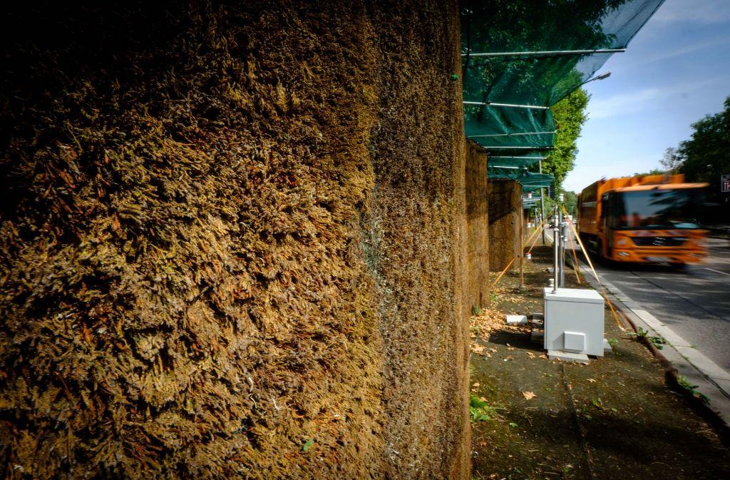 Die Mooswand an der B14 soll zur Verbesserung der Luftqualität beitragen. Foto: Lichtgut/Achim Zweygarth