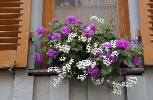 Neue Kategorien beim  Blumenschmuck-Wettbewerb