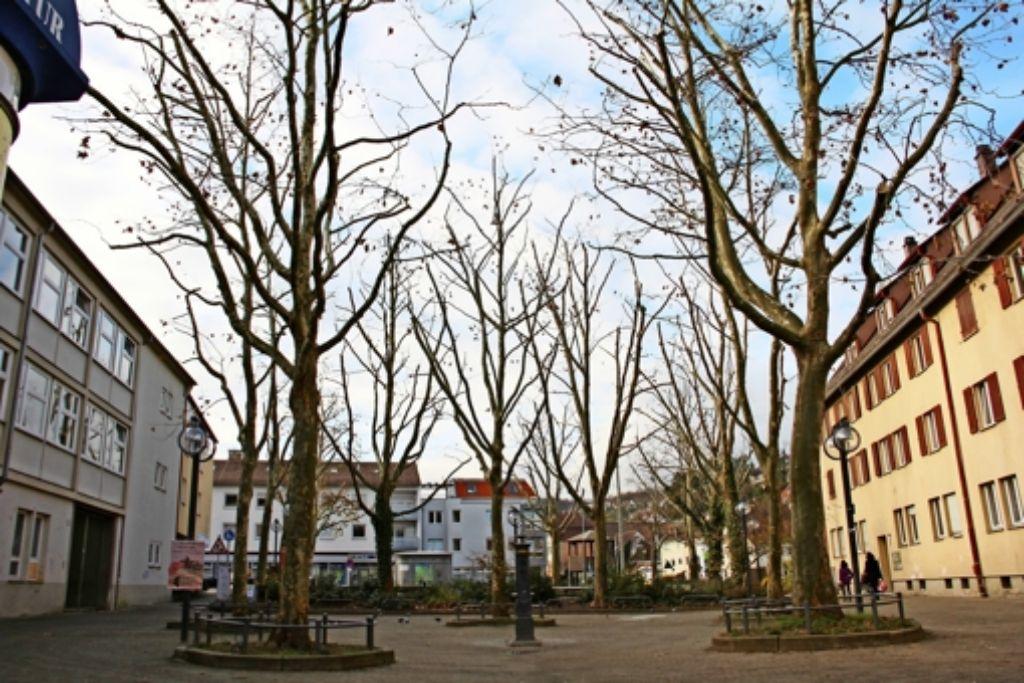 Von den 17 Bäumen, die sich  auf dem Marktplatz befinden, werden elf im Februar  gefällt. Allerdings  werden auch  drei neue Bäume gepflanzt. Foto: Archiv Torsten Ströbele