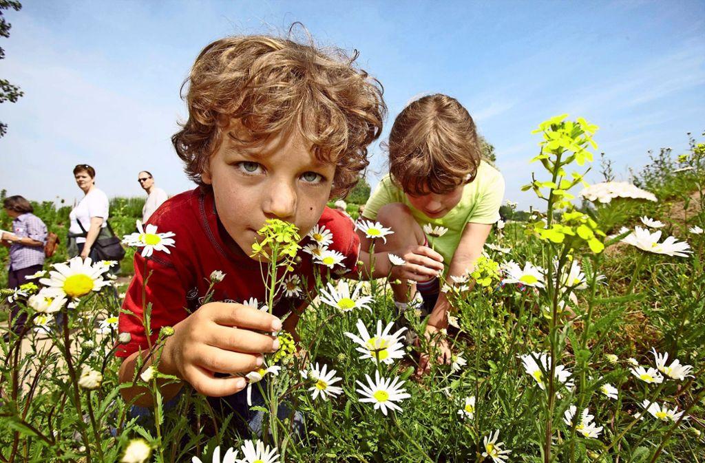 Auf öffentlichen Flächen werden in Filderstadt keine zusätzlichen Wildblumen wachsen. Foto: dpa