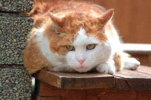 Vier tote Katzen in Müllwohnung gefunden