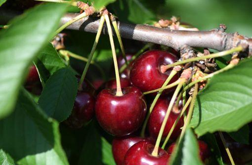 Kommune geht gegen Obstdiebe vor