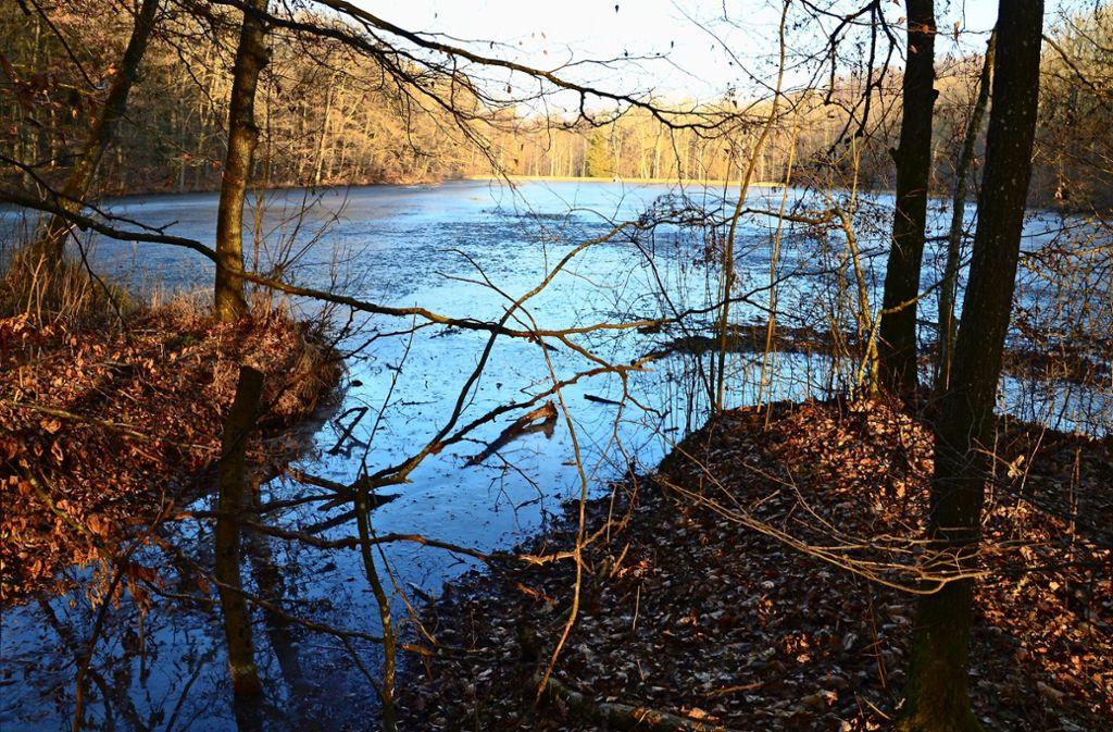 Der Katzenbachsee gehört der EnBW-Tochter Netze BW, die Fischereirechte gehören dem Land. Auch dadurch ist der Kauf  für Anglervereine uninteressant. Foto: Sandra Hintermayr