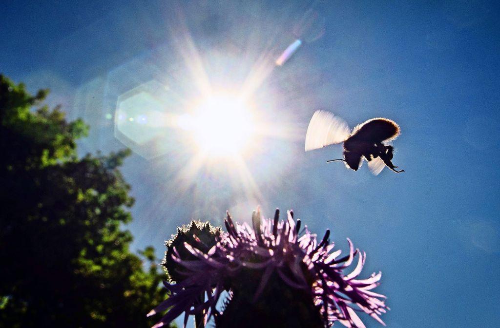 Der Insektenbestand geht teils dramatisch zurück. Besonders betroffen sind einige Wildbienen- und Schmetterlingsarten. Foto: dpa