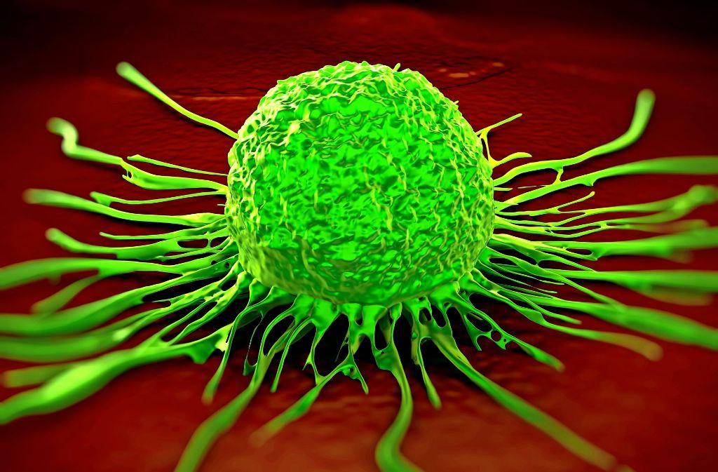 Gefährliche Krebszellen: Im Körper können sie sich perfekt vor dem Immunsystem verstecken. Neuartige  Therapien sollen sie enttarnen – und effektiv bekämpfen. Foto: Mauritius