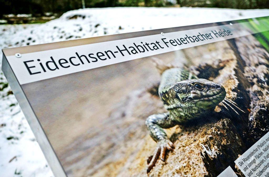 Für Stuttgart 21 mussten erst Eidechsen umgesiedelt werden. Foto: Lichtgut/Leif Piechowski