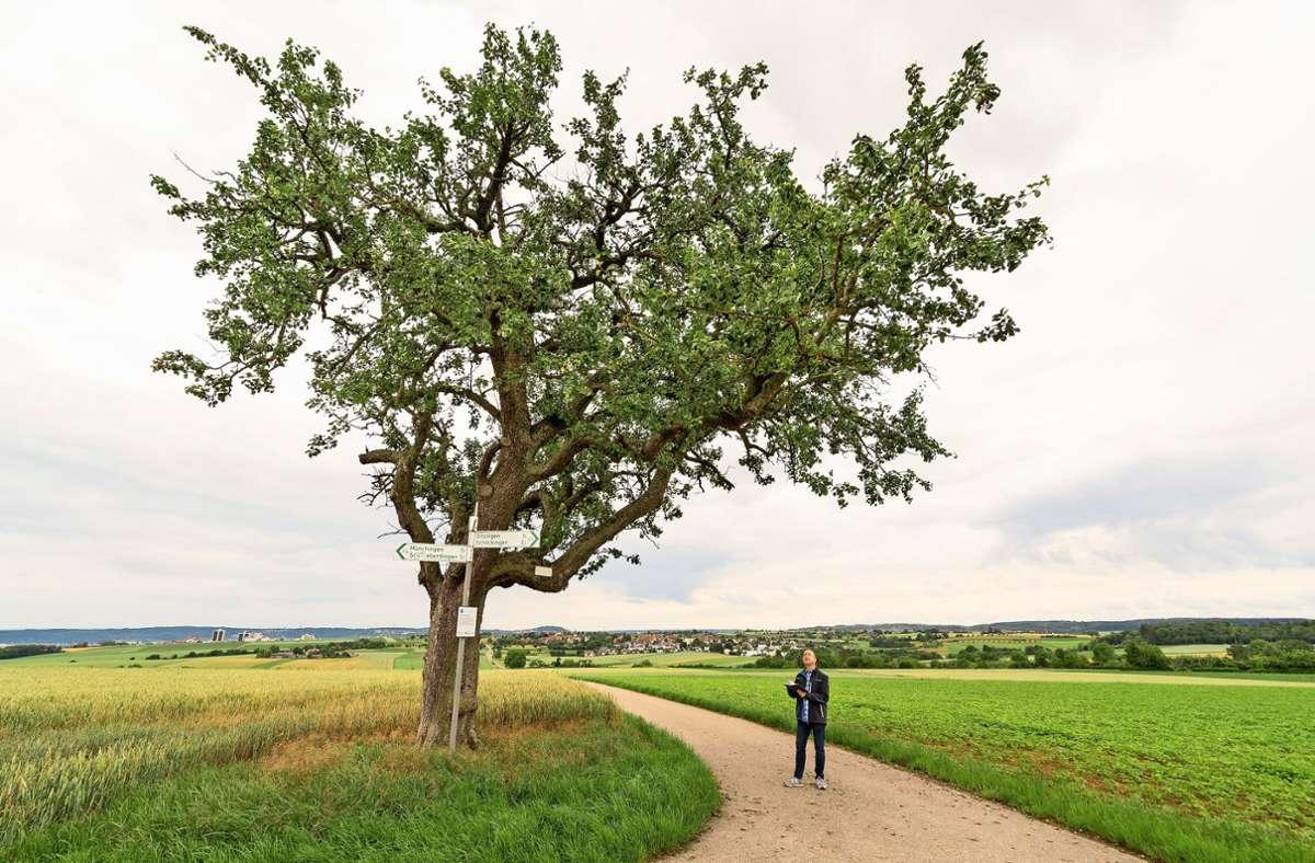 Matthias Braun steht unterm Birnbaum am Pfaffenkreuz. Foto: factum/Jürgen Bach