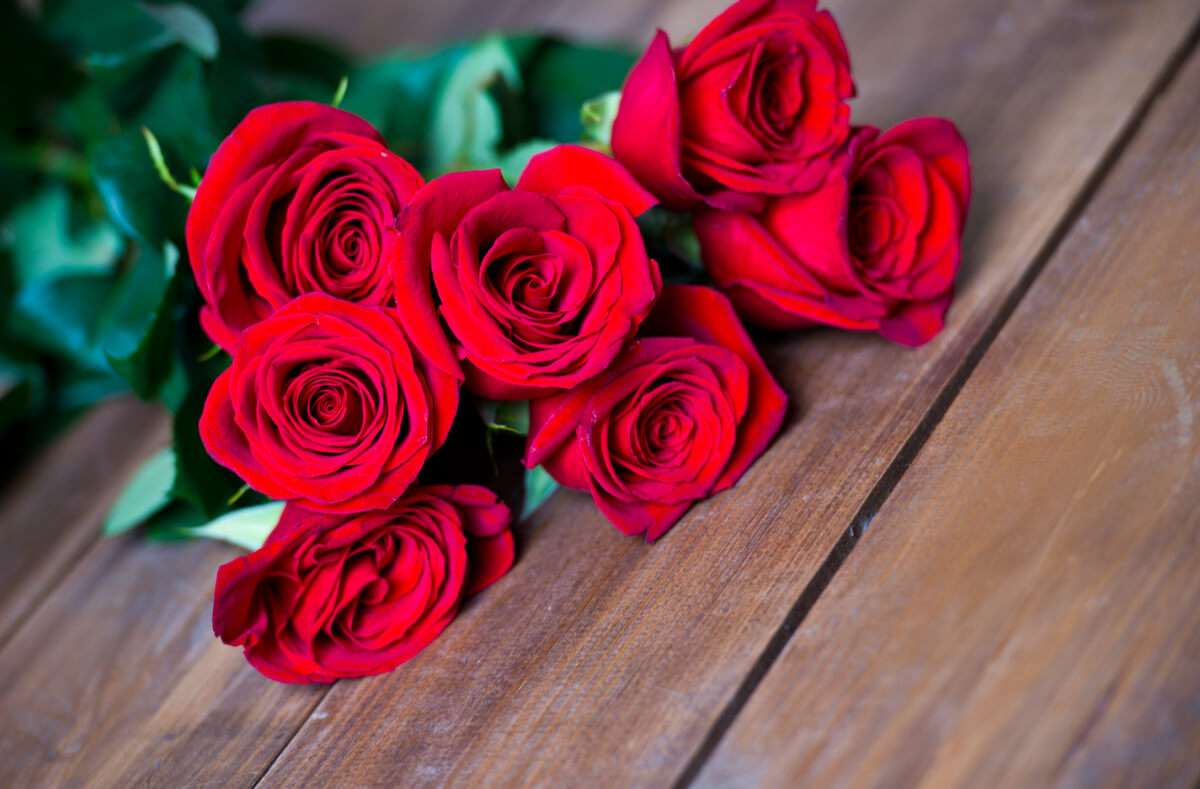 Die Rosen-Anzahl spielt eine wichtige Rolle für die Botschaft. Alles über die Bedeutung der Anzahl von Rosen als Geschenk. Foto: Freya-Photographer / Shutterstock.com