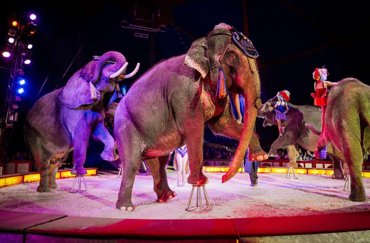 Der Circus Krone ist nicht allein mit seinen Nöten. Es gibt zahlreiche andere Zirkusse in Deutschland. Foto: dpa/Christoph Schmidt