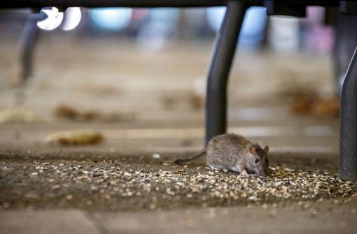 Ratten in  der Literatur