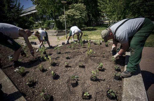 Einbrecher bei den städtischen Gärtnern
