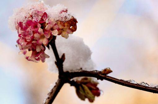Diese Pflanzen sind dufte auch bei Eis und Schnee!