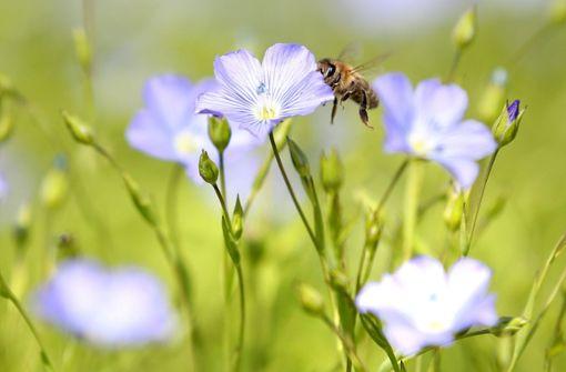 Blumen und Bienen statt  einer Gebäudekiste