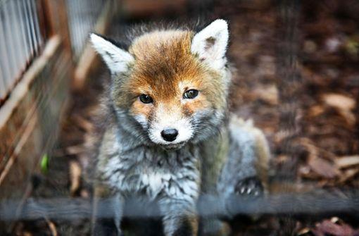 Kein Name, aber viel Fürsorge für den Fuchs