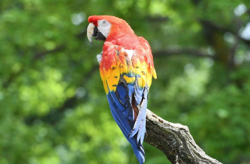 Papagei Film