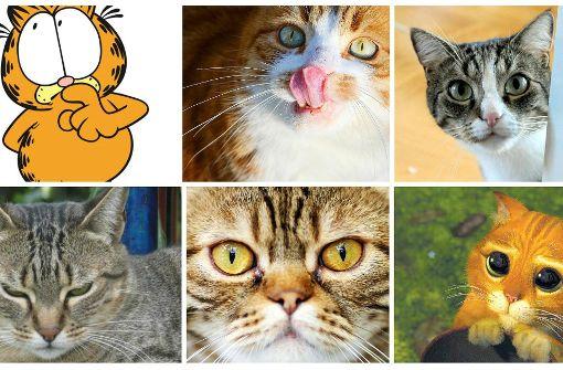Katze oder Kater?