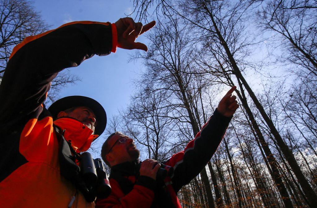 Gunnar Stettner (rechts) und sein Kollege suchen den Stamm nach auffälligen Löchern ab.  Foto: factum/Simon Granville