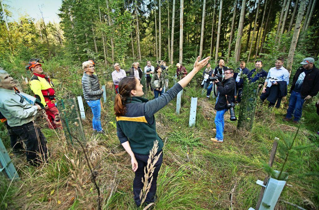Die Kirchheimer Revierförsterin Carla Hohberger erklärt dem Gemeinderat die nachhaltige Waldwirtschaft. Foto: Horst Rudel