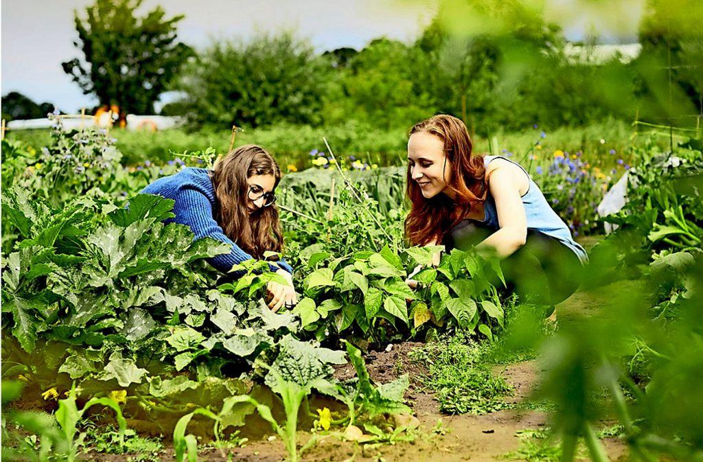 Die Flächen der Ackerhelden werden nach den Richtlinien der Anbauverbände Bioland, Demeter oder Naturgut bewirtschaftet – in Stuttgart ist der Demeter-Betrieb Hof Eichenhain  der Familie Wais in Riedenberg der Kooperationspartner.  Foto: Ackerhelden