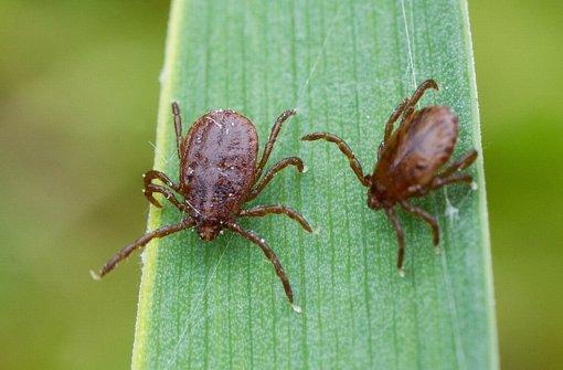 Zecken tragen viele Krankheitserreger in sich. Foto: dpa