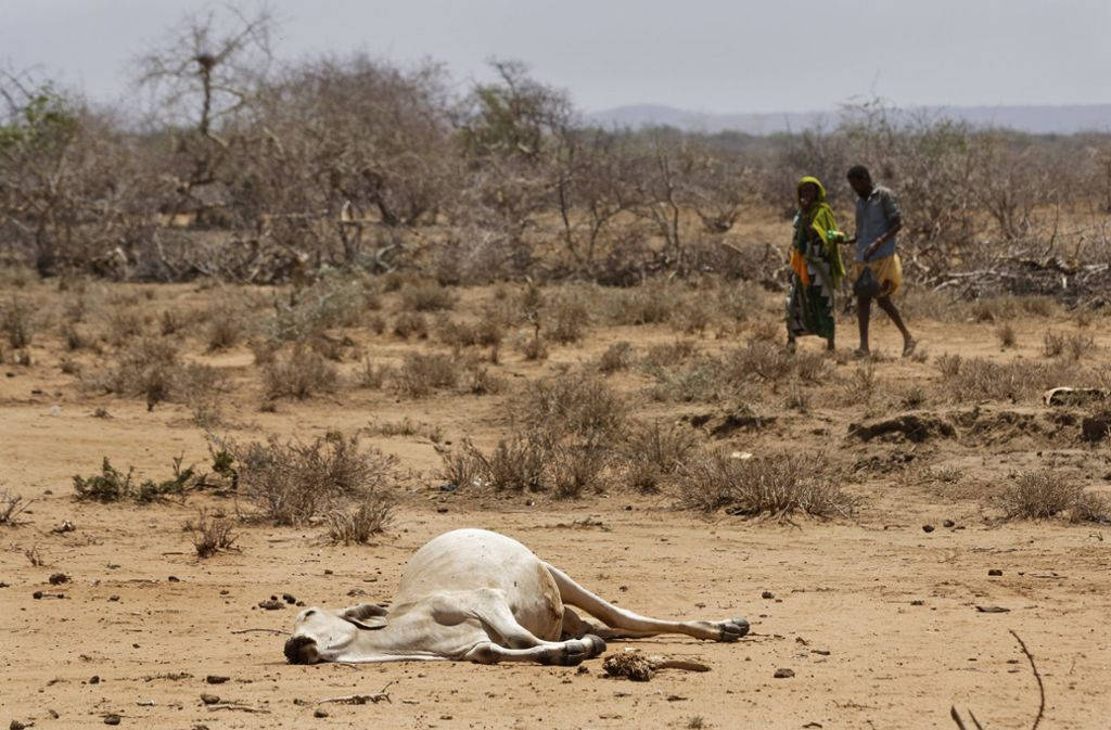 Kenia: Dorfbewohner gehen an der Grenze zu Äthiopien am Kadaver eines Rindes vorbei. Die Gefahr einer Heißzeit kann aus Sicht von Klimaforschern selbst beim Einhalten des Pariser-Klimaabkommens nicht ausgeschlossen werden.  Foto: dpa
