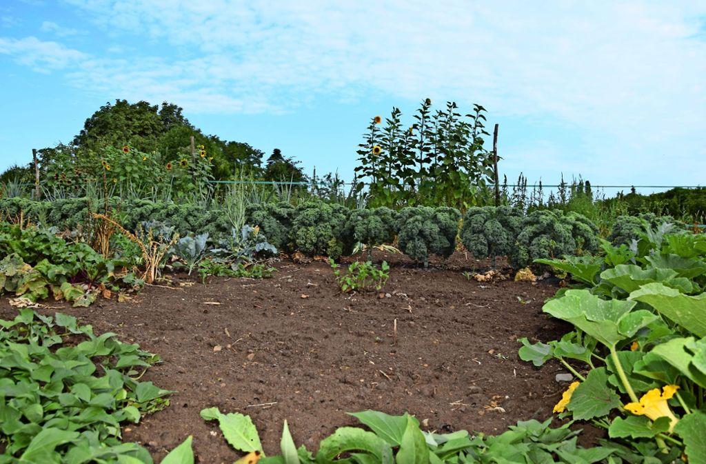 In unserem Schreiber-Garten an der Balinger Straße  liegen aktuell große Flächen brach. Doch das ist ein Irrtum, denn im Boden schlummern bereits neue Samen. Unser Team hofft, bald noch einmal ernten zu können. Foto: Alexandra Kratz
