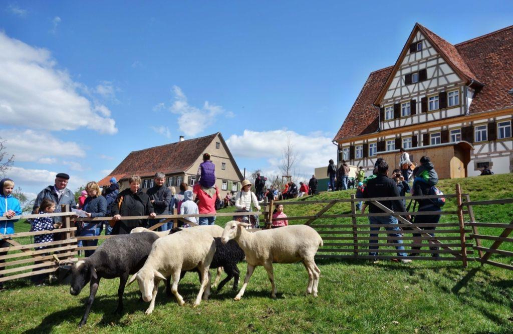Die museumseigenen Schafe haben am Wochenende die volle Aufmerksamkeit für sich. Foto: Museum