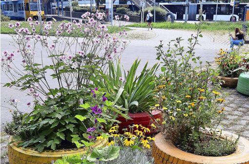 Karl-Benz-Platz als Ausflugstipp für Gartenfreunde Karl-Benz-Platz als Ausflugstipp für Gartenfreunde