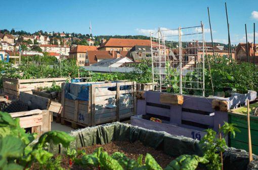 Fernab von Feinstaub, Betonwüste und Großstadtlärm: Urban-Jungle-Feeling geht auch im Kessel. Das sind Stuttgarts coolste Urban Gardening Spots.