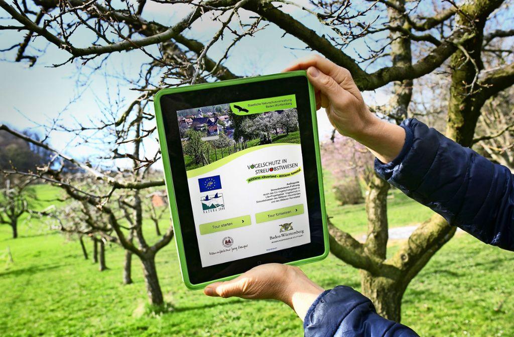 Typisch fürs Albvorland sind die  Hochstammwiesen. Die Bäume  müssen von Hand abgeerntet werden und sind weniger ertragreich. Dafür punkten Äpfel und Co mit Aromen. Foto: Ines Rudel