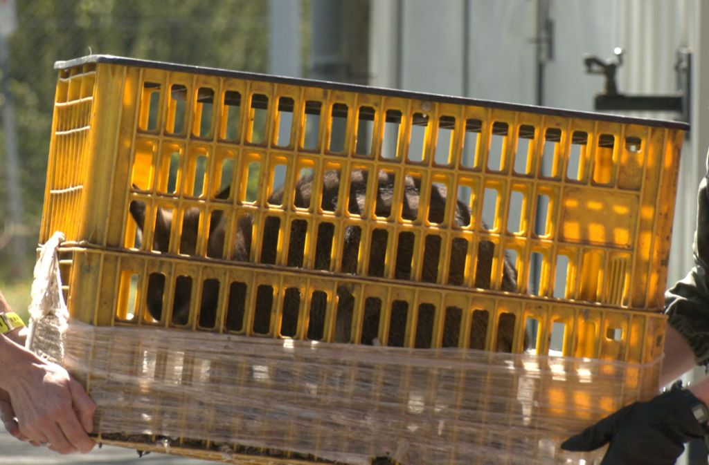 Die Polizei entdeckte bei einer Kontrolle das Tier in einem Auto. Foto: Polizeipräsidium Unterfranken