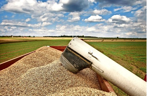 Bauern ernten weniger Getreide als im Vorjahr