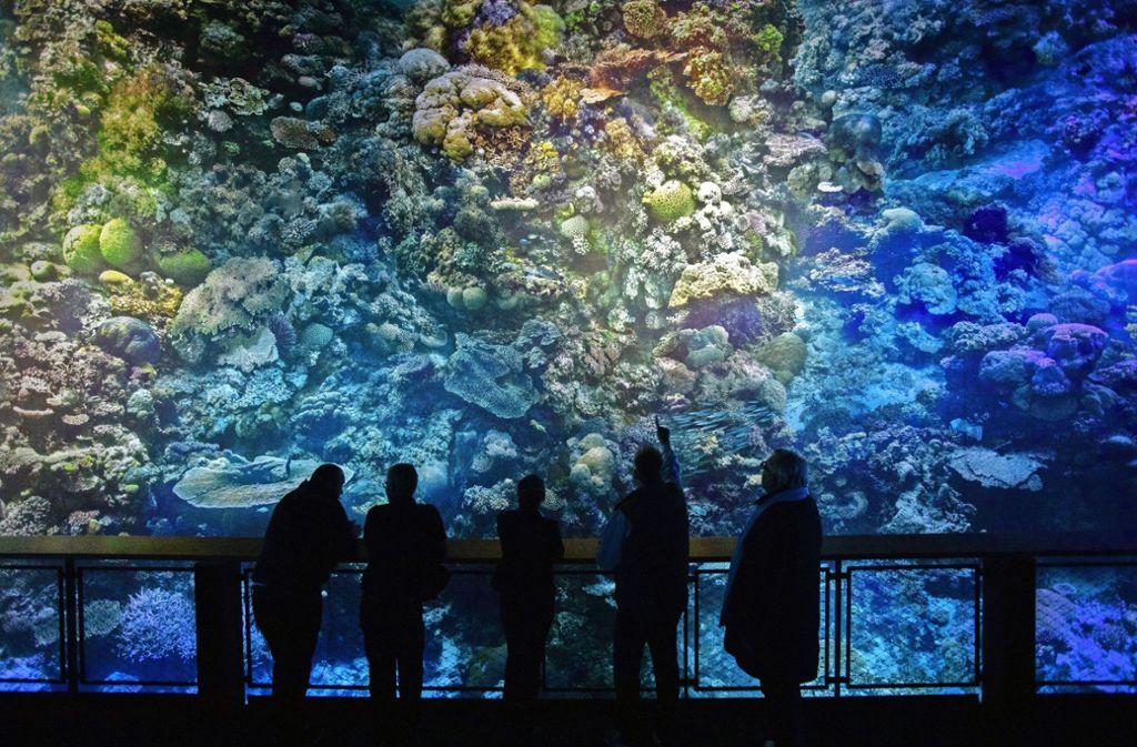 Das 360-Grad-Panorama-Bild im Pforzheimer Gasometer zeigt das Great Barrier Reef. Foto: Sebastian Seibel