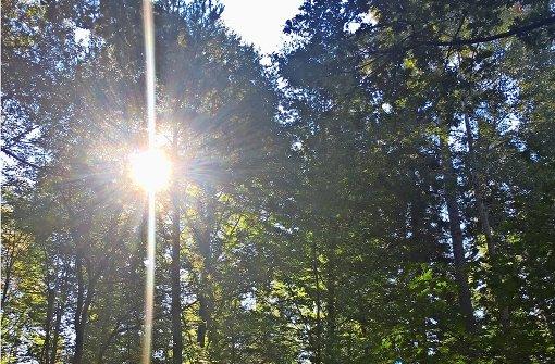 Das stille Gespräch der Bäume