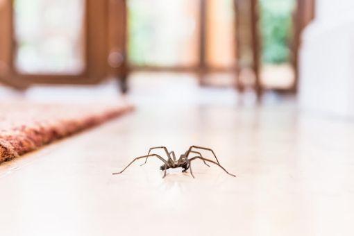 Vorschaubild zum Artikel Spinnen einsaugen