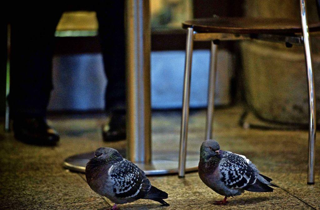 Für manche Bahnkunden sind Tauben, die nach Speiseresten picken, ungern gesehene Gäste in den gastronomischen Betrieben am Hauptbahnhof. Foto: Lichtgut/Max Kovalenko