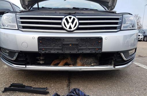 VW erfasst Hund – Tier fährt unter Kühlergrill mit