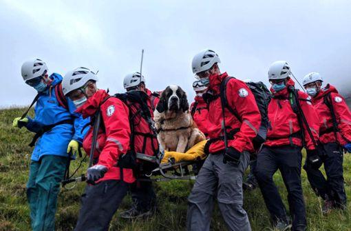 Bernhardiner-Hündin muss von Bergwacht gerettet werden