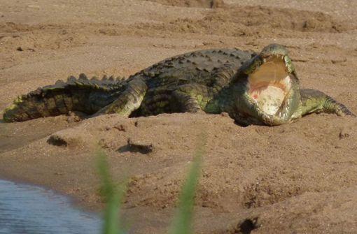 Der mit den Krokodilen schwamm