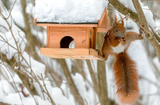 Darf man Wildtiere im Winter füttern?