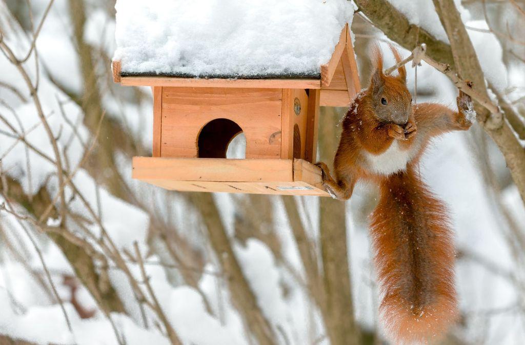 tiere brauchen tiere im winter hilfe wissen stuttgarter zeitung. Black Bedroom Furniture Sets. Home Design Ideas