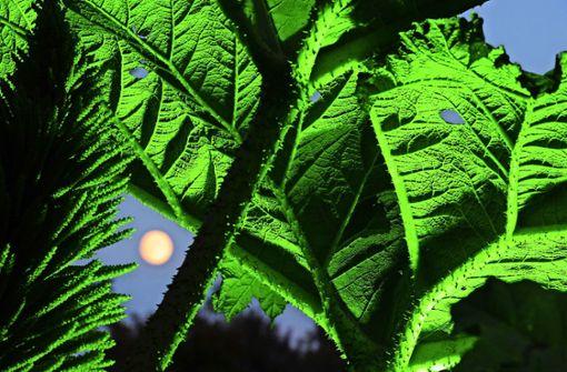 Gärtnern im Einklang mit Mond und Sternen