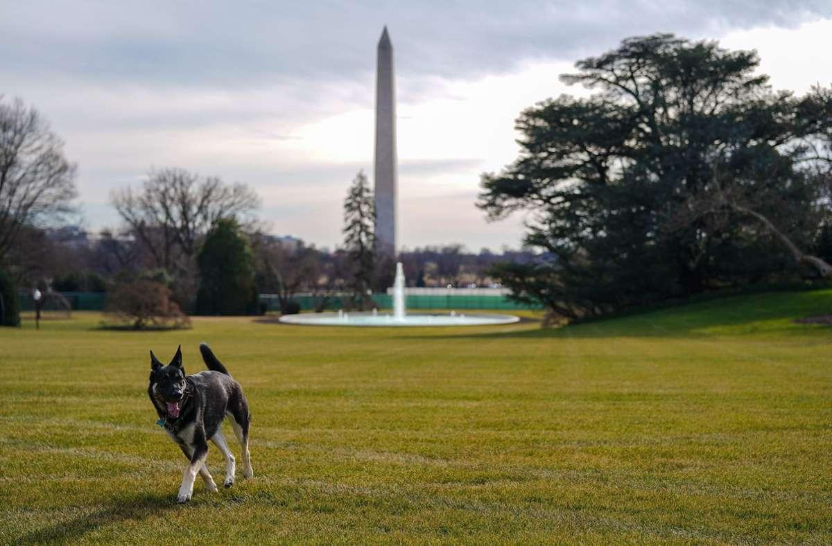 """Major erkundet den """"South Lawn"""", den Garten des Weißen Hauses. Foto: dpa/Adam Schultz"""