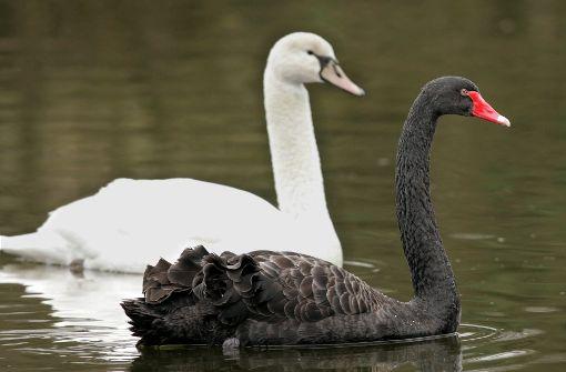 Behörden sperren Vogelpark